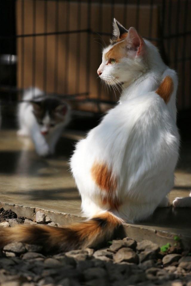 Polri Tanggapi Video Diduga Oknum Brimob Lempar Kucing ke Parit (222213)