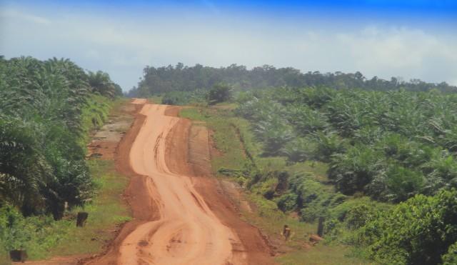 Hutan Sakral di Kampung Selil, Merauke, Dirusak Perusahaan Sawit (447434)