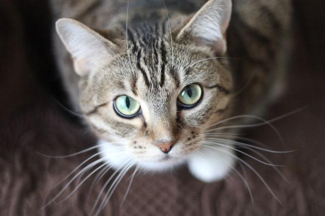 6 Aksi Lucu Kucing Ikuti Perilaku Manusia Kumparan Com