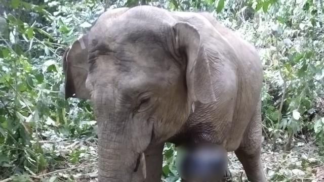 BKSDA Cari Solusi Atasi Konflik Gajah-Manusia di Aceh Utara (309889)
