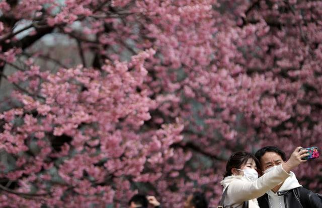 Foto: Melihat Mekarnya Bunga Sakura di Tengah Wabah Virus Corona (1230243)