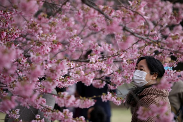 Bunga Sakura di Jepang - virus corona
