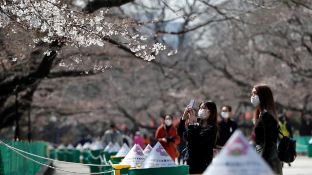 Foto: Melihat Mekarnya Bunga Sakura di Tengah Wabah Virus Corona (1230236)