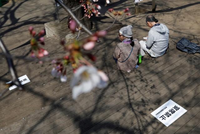 Foto: Melihat Mekarnya Bunga Sakura di Tengah Wabah Virus Corona (1230245)