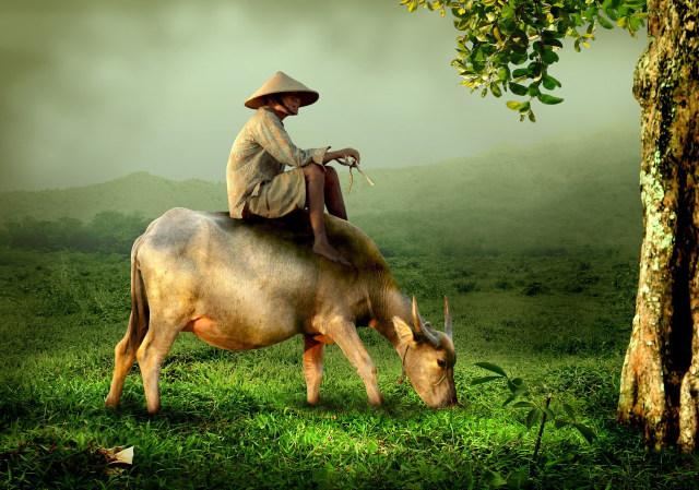 cow-519246_1920.jpg