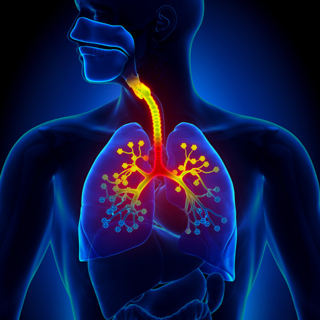 lungs-bronchitis-sick-disease-cold-decade3d -iStock-498528871.jpg