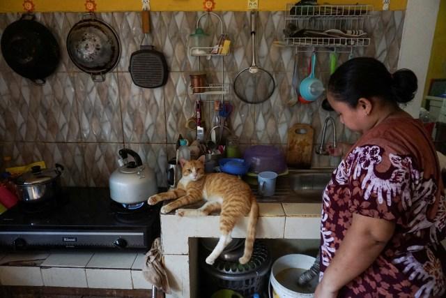 Kasih Sayang untuk Kucing Tak Pandang Bulu (172148)
