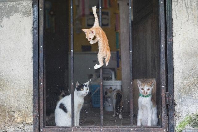 Kasih Sayang untuk Kucing Tak Pandang Bulu (172153)