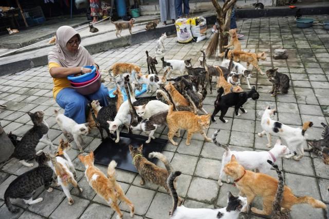 Kasih Sayang untuk Kucing Tak Pandang Bulu (172146)