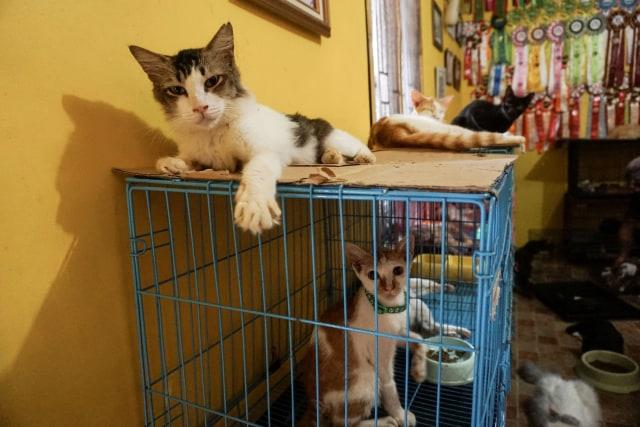 Kasih Sayang untuk Kucing Tak Pandang Bulu (172155)