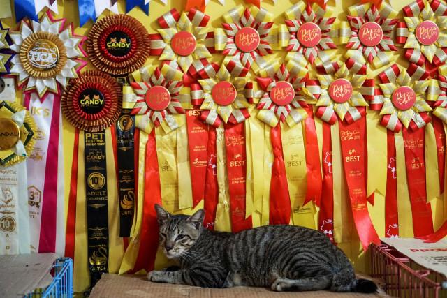 Kasih Sayang untuk Kucing Tak Pandang Bulu (172156)