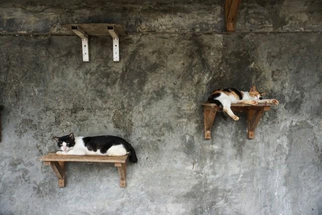 Kasih Sayang untuk Kucing Tak Pandang Bulu (172154)