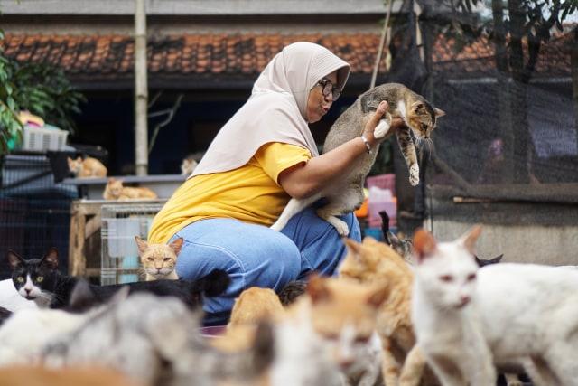 Kasih Sayang untuk Kucing Tak Pandang Bulu (172151)