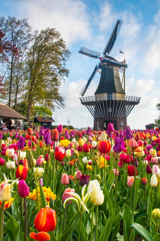 Bikin Haru Petani Bunga Di Belanda Beri Pesan Menyentuh Di Tengah Bunga Tulip Kumparan Com
