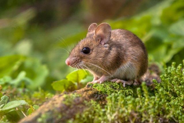 3 Cara Jitu Terhindar dari Tikus Saat Mobil Terlalu Lama di Rumah karena WFH (720773)