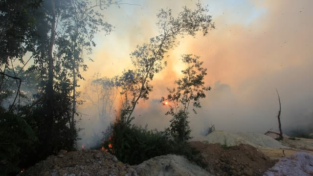 kebakaran hutan.png