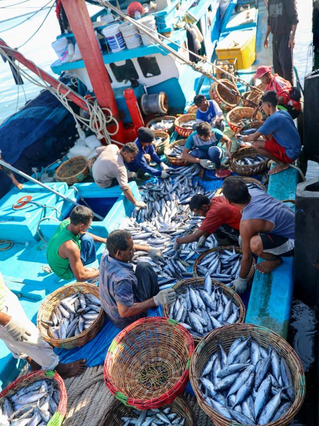Penghasilan Nelayan Aceh Menurun Akibat Harga Ikan Anjlok Selama Pandemi Corona (78473)