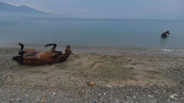 Foto: Melatih Kuda Pacu di Pantai Talise, Palu (769241)