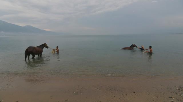 Foto: Melatih Kuda Pacu di Pantai Talise, Palu (769240)