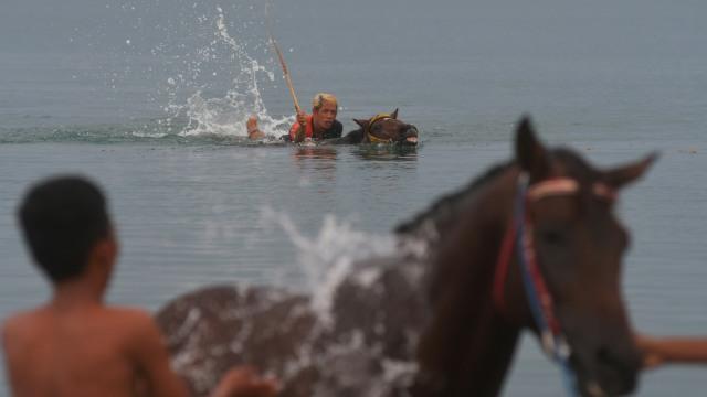 Foto: Melatih Kuda Pacu di Pantai Talise, Palu (769238)