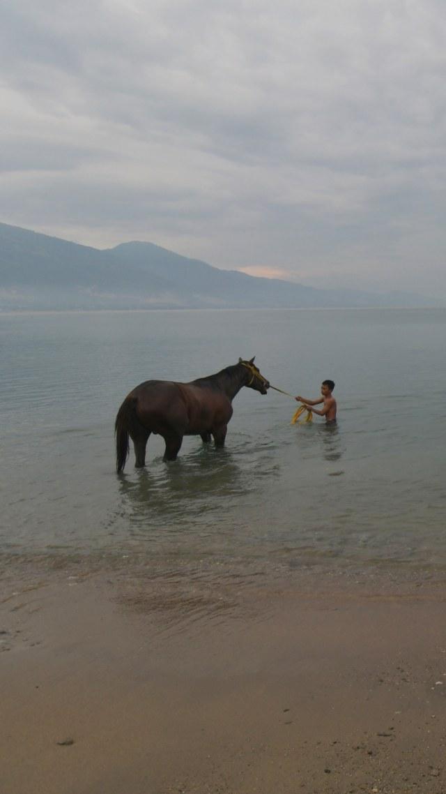 Foto: Melatih Kuda Pacu di Pantai Talise, Palu (769237)