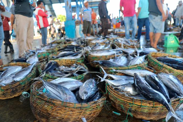 Foto: Dampak Corona, Harga Ikan Anjlok di Banda Aceh (74942)