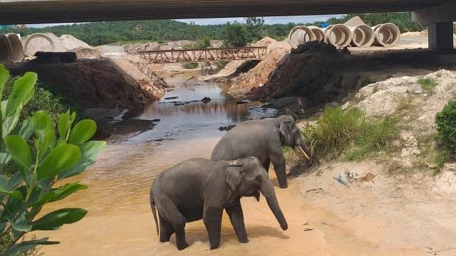 Kisah Tol Pekanbaru-Dumai: Ada Terowongan Gajah sampai Pekerja Disatroni Harimau