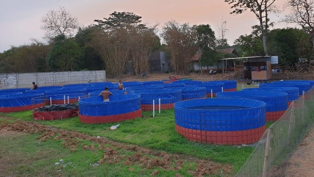 Melihat Peluang Bisnis Ternak Lele di Tengah Pandemi Corona  (63978)