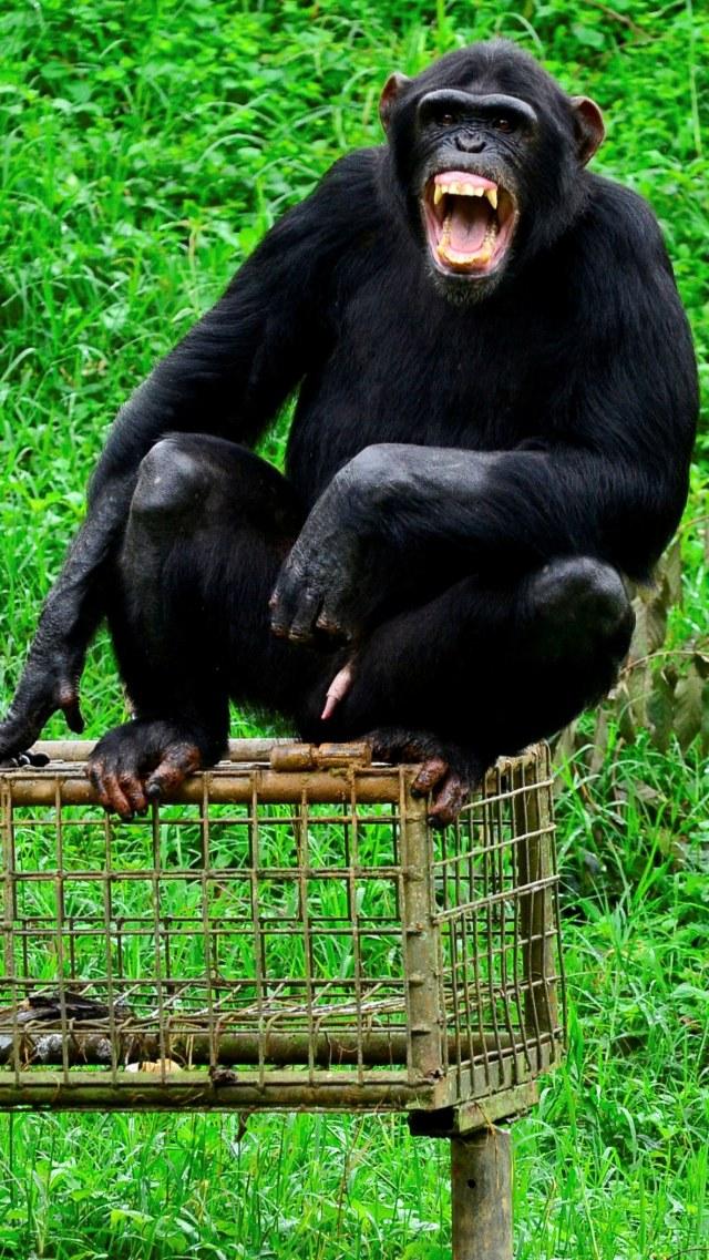 Hewan-hewan dengan Ikatan Kekeluargaan yang Kuat (46880)