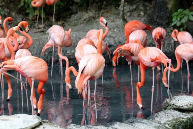 Sepi Pengunjung Danau Di Mumbai Kedatangan 150 Ribu Burung Flamingo Kumparan Com