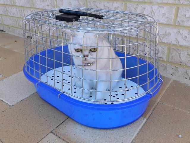 Di Tengah Pandemi COVID-19 Usaha Pet Shop di Yogyakarta Tetap Moncer (495528)