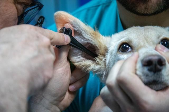 Di Tengah Pandemi COVID-19 Usaha Pet Shop di Yogyakarta Tetap Moncer (495529)