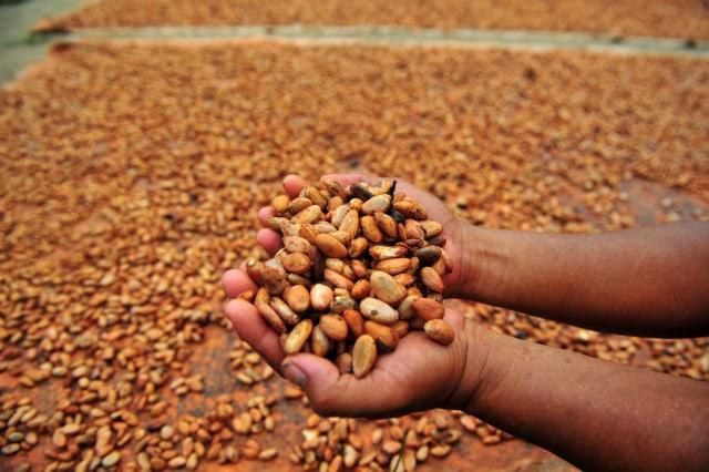 Usai Brexit, RI Mau Genjot Ekspor Kopi hingga Kakao ke Inggris (80028)