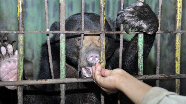 Pengamat Satwa Liar IPB: Pandemi Corona, Kebun Binatang Sangat Kritis (214976)