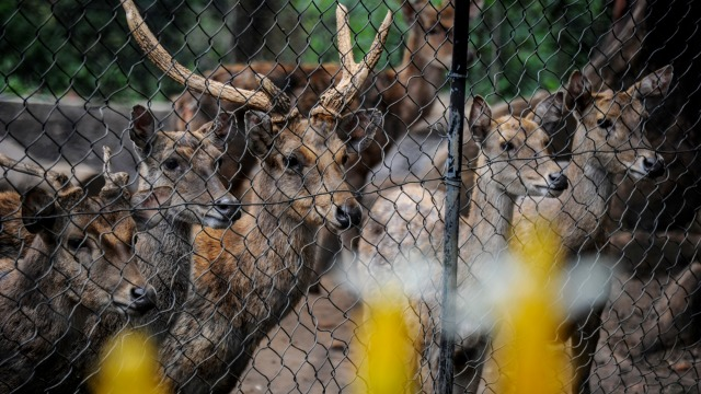 Pengamat Satwa Liar IPB: Pandemi Corona, Kebun Binatang Sangat Kritis (214974)