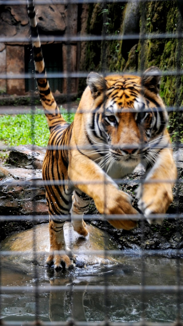Pengamat Satwa Liar IPB: Pandemi Corona, Kebun Binatang Sangat Kritis (214977)