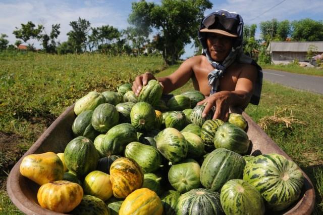 Supaya The New Normal Tak Makin Sengsarakan Petani (44735)