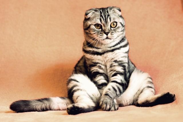 Kisah Mueeza Kucing Kesayangan Nabi Muhammad Saw Kumparan Com