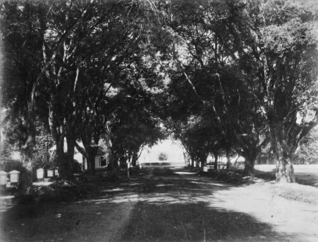 Weltevreden, Tempat Wisata Pertama Masyarakat Kolonial Belanda di Jakarta (72622)