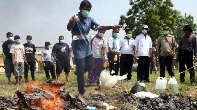 Flu burung di Indonesia