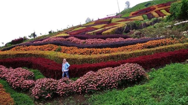 Amboi! Cantiknya Taman Bunga di Sumatera Barat Ini Mirip Wisata di Jepang  (163225)