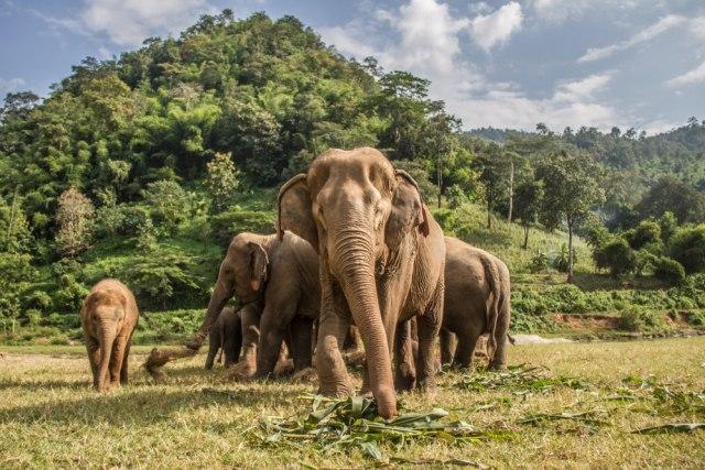 Lucunya Gajah Ini, Tertidur Pulas Saat sedang Berenang di Kolam (374346)