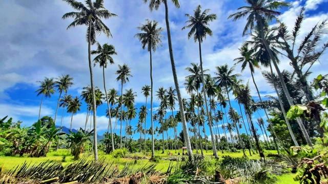 Kisah Warga Gorontalo Hibahkan 1 Hektare Tanah untuk Pekuburan Jenazah COVID-19 (152033)