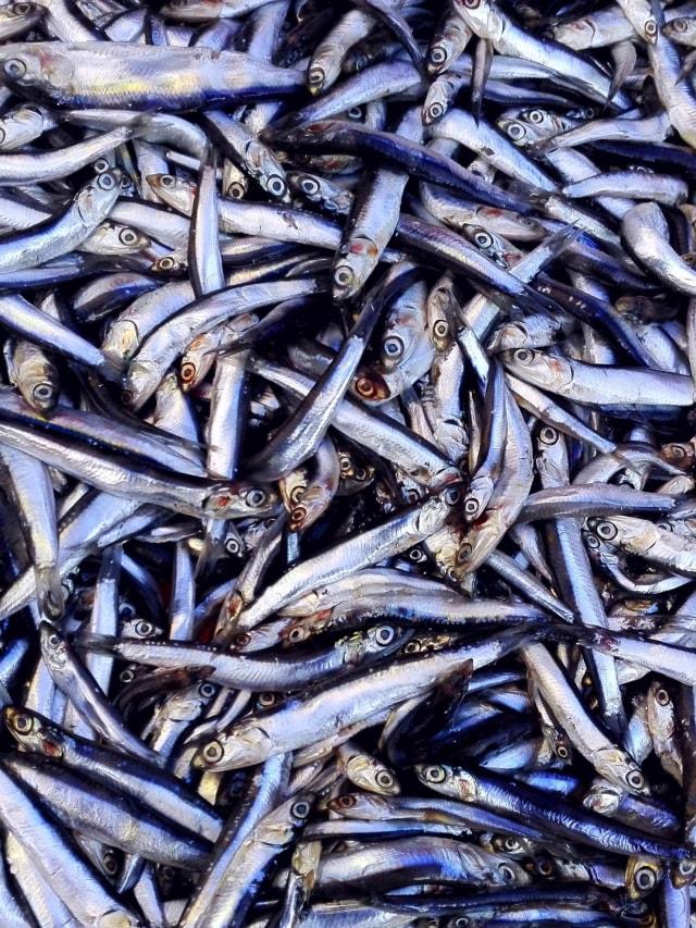 5 Jenis Ikan  Sehat untuk Tingkatkan Daya Tahan Tubuh Keluarga (551821)