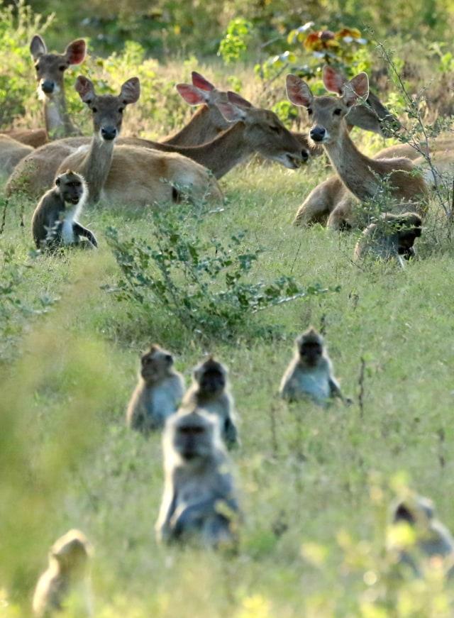 Taman Nasional Baluran Kembali Dibuka, Pengunjung Wajib Booking Online (219898)