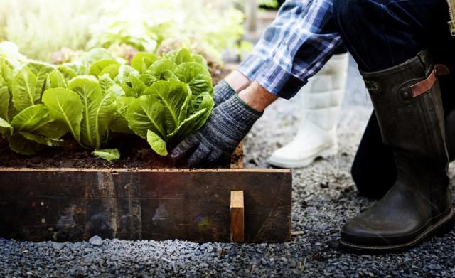 Bisa Jadi Hobi Baru, 7 Sayuran dan Rempah yang Dapat Ditanam Ulang di Rumah (311391)
