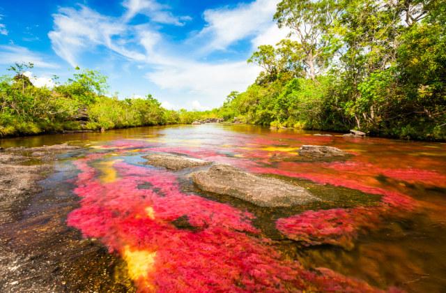 Menilik Cano Cristales, Sungai Terindah di Dunia yang Mirip Pelangi (21536)