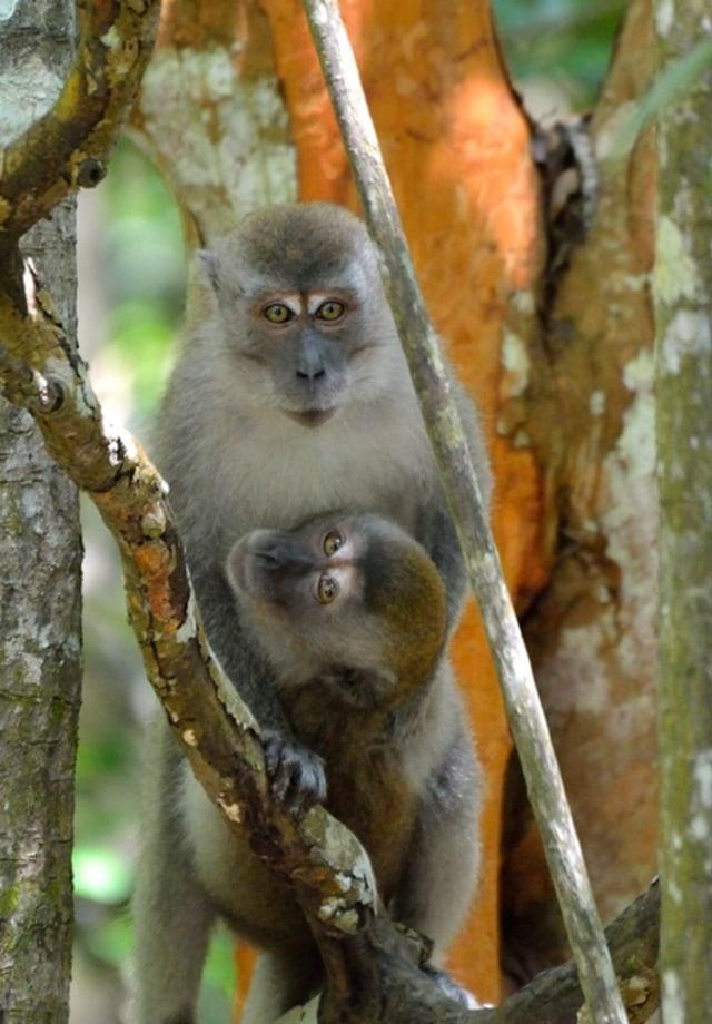 RER Terus Perbaiki Hutan Rawa Gambut Utuh Terbesar di Sumatra (29531)