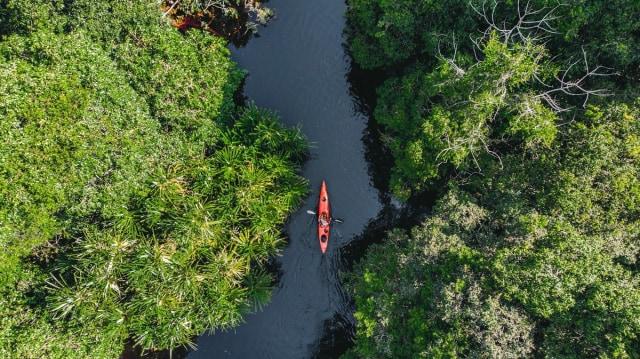 RER Terus Perbaiki Hutan Rawa Gambut Utuh Terbesar di Sumatra (29528)