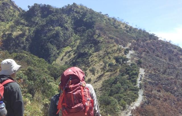 Lagi, Viral Video Pendaki Tertangkap Basah Petik Edelweis di Gunung Lawu (202564)